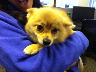 Tulsa SPCA talks Clear the Shelters