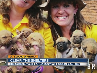 Mission Rabies helps vaccinate thousands of dogs