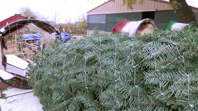 the jacobs planted their first christmas trees 35 years ago and the hobby they intended to pursue as a project in retirement quickly grew to become a big