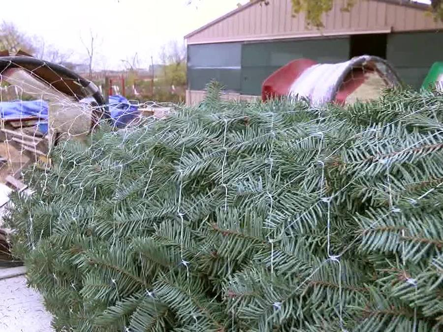 owasso couple still selling growing christmas trees 35 years after starting business kjrhcom