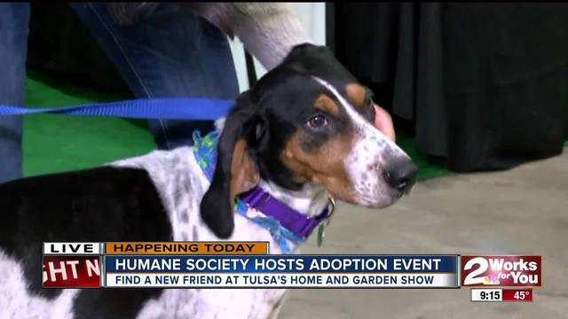 Tulsa Humane Society Hosting Largest Adoption Event Of Year At Home And Garden Show