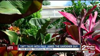 Paul James: Bringing the tropics home