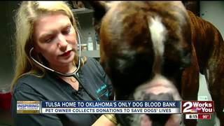 Tulsa home to state's only dog blood bank