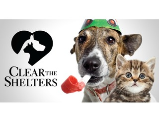 Clear the Shelters 2017: 400 pets find homes