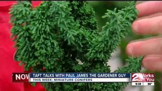 Paul James covers the popular mini-conifers