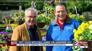 Paul James: Pansies...cool season color