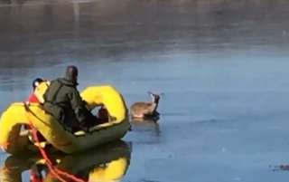 Deer rescued from icy Pittsburg County pond