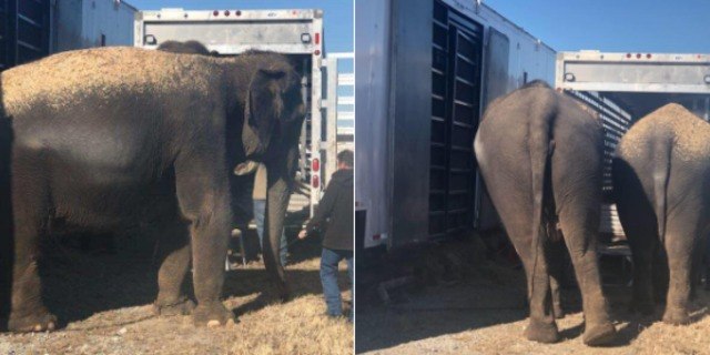 Four elephants stall highway 69 traffic in Eufaula