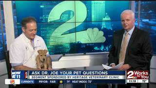 Ask Dr. Joe Your Pet Questions - Nugget the Dog