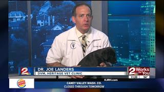 Ask Dr. Joe Your Pet Questions - Bubba the Dog