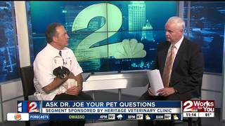 Ask Dr. Joe Your Pet Questions - Bart the Dog