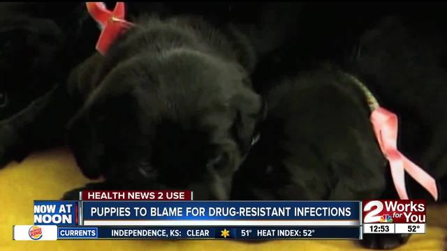 Puppies to blame for drug-resistant infections