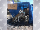 Northeastern Okla. dealing with pet population